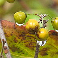 Golden Autumn Drops In by Loretta Pokorny