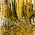 Golden Autumn Forest by Hakon Soreide