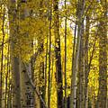 Golden Autumn  by Saija  Lehtonen