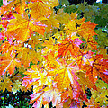 Golden Autumn by Sergey and Svetlana Nassyrov