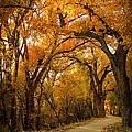 Golden Canopy by Lena Sandoval-Stockley