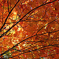 Golden Canopy by Rachel Cohen