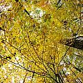 Golden Canopy by Rick Berk
