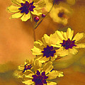 Golden Coreopsis Wildflowers  by Kathy Clark