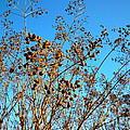 Golden Crepe Myrtle Seeds by Renee Trenholm