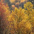 Golden Days by Gary Suddath