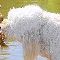Golden Doodle And Goggle Eye by Betty Berard