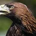 Golden Eagle by Denise Swanson