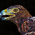 Golden Eagle by Mariola Bitner