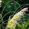Golden Feather by Maria Urso