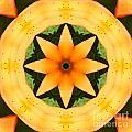 Golden Flower 2 by Barbara Griffin
