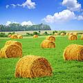 Golden Hay Bales In Green Field by Elena Elisseeva