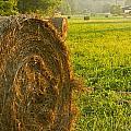 Golden Hay Field by Douglas Barnett