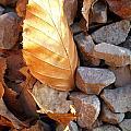Golden Leaf by Gareth Tanner
