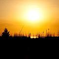 Golden Margarita Sunset by Christine Stonebridge