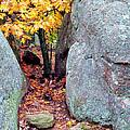 Golden Oak Through Boulders At Elephant Rocks State Park by Greg Matchick