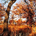 Golden Oaks by Larry Ricker