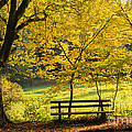 Golden October - Bench And Yellow Trees In Fall by Matthias Hauser
