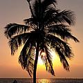 Golden Palm by Dallas Clites