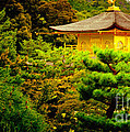 Golden Pavilion Temple In Kyoto Glowing In The Garden by Andy Smy