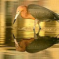 Golden Reflection by Myrna Bradshaw