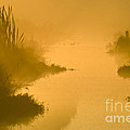 Golden Riverside by Heiko Koehrer-Wagner