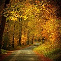Golden Road by Joyce Kimble Smith