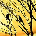 Golden Silhouette  by Bernard Yong