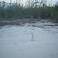Golden Slipper Egret Sea Oats by Debbie Wassmann