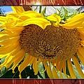 Golden Sunflower by Ann Warrenton
