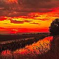 Golden Sunrise by Robert Bales