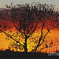 Golden Sunset Over Circle B Bar Sandstone by Barbara Bowen