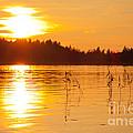 Golden Sunsset by Johan Larson