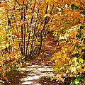 Golden Trail by Kim Hymes