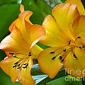 Golden Tropical Flowers by Darleen Stry