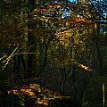 Golden Woodland by Peter Jenkins