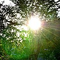 Good Day Sunshine by Maria Urso