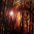 Good Day Sunshine by Mary Anne Williams