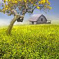 Good Morning Spring by Debra and Dave Vanderlaan