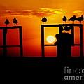 Goodnight Gulls by Karen Wiles
