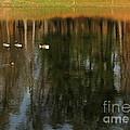 Goose Goose Duck Goose by Trish Hale