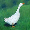 Goose On Green by Kazumi Whitemoon