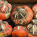 Gorgeous Gourds by Jim And Emily Bush