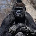 Gorilla by Ronald Grogan