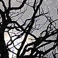 Goth Tree by First Star Art