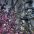 Gothic Paris by Jennifer Ancker