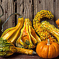 Gourds Against Wooden Wall by Garry Gay