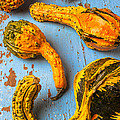 Gourds on wooden blue board by Garry Gay