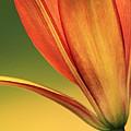 Graceful by Deborah  Crew-Johnson