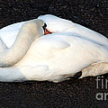 Graceful Repose by Susan Wall